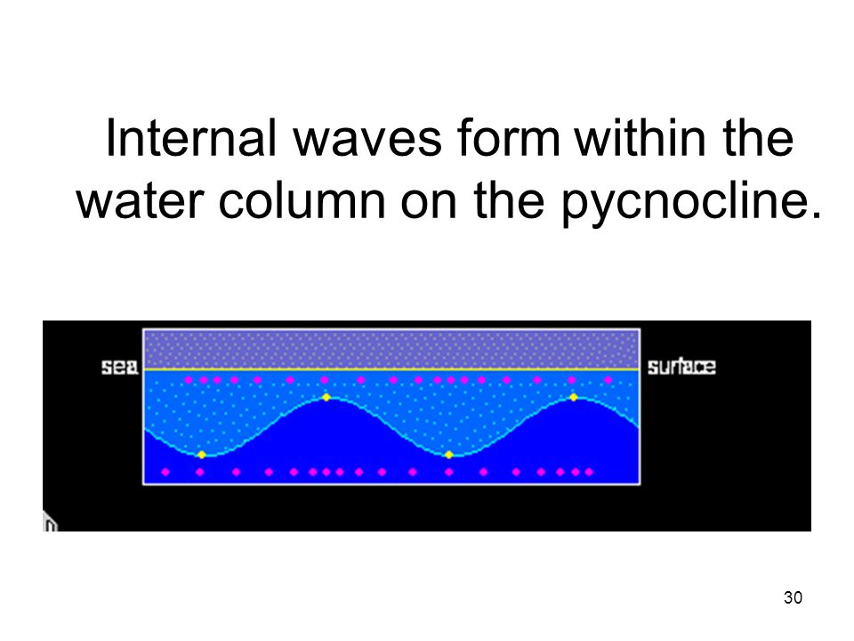 Internal waves form within the water column on the pycnocline.