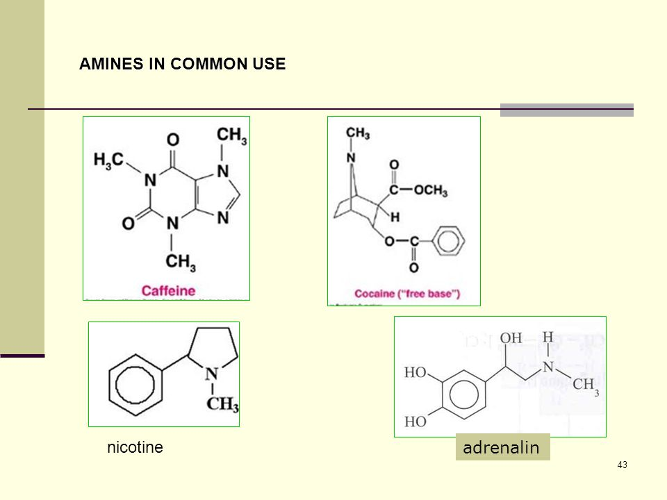 AMINES IN COMMON USE nicotine adrenalin