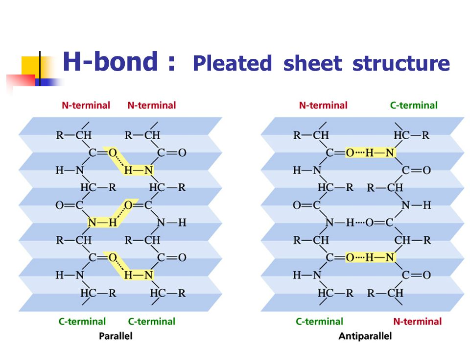 H-bond : Pleated sheet structure