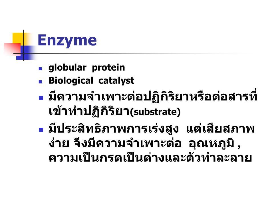 Enzyme มีความจำเพาะต่อปฏิกิริยาหรือต่อสารที่เข้าทำปฏิกิริยา(substrate)
