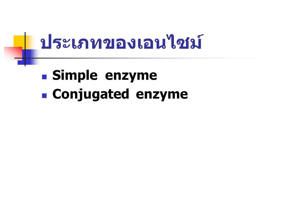 ประเภทของเอนไซม์ Simple enzyme Conjugated enzyme