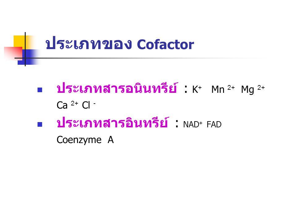 ประเภทของ Cofactor ประเภทสารอนินทรีย์ : K+ Mn 2+ Mg 2+ Ca 2+ Cl -