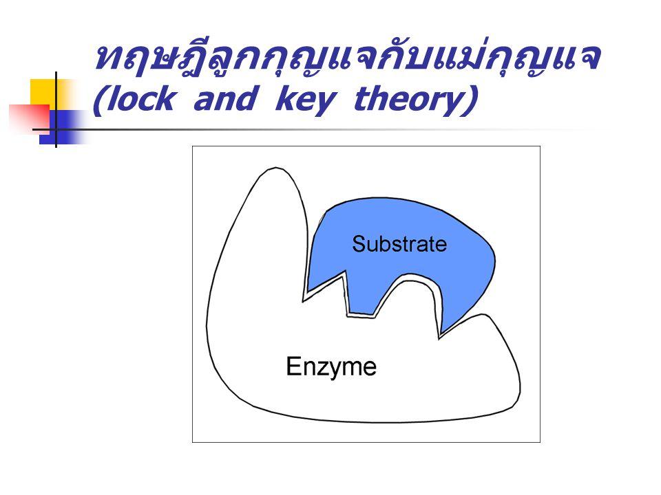 ทฤษฎีลูกกุญแจกับแม่กุญแจ (lock and key theory)