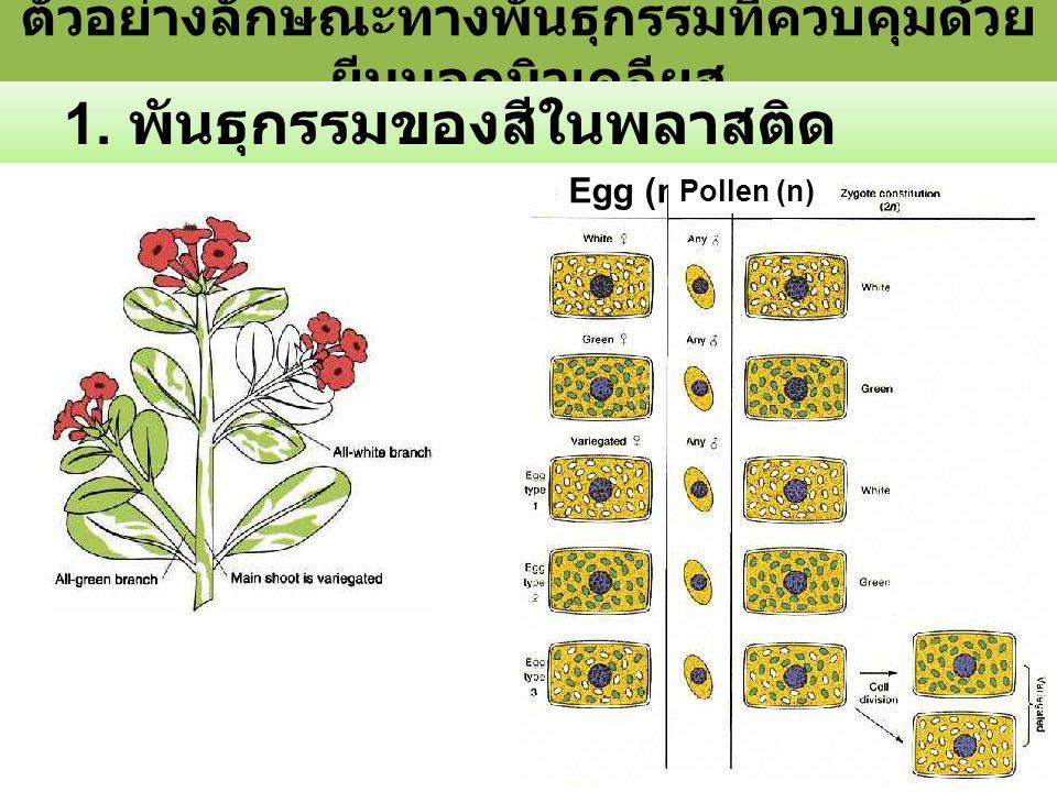 ตัวอย่างลักษณะทางพันธุกรรมที่ควบคุมด้วยยีนนอกนิวเคลียส