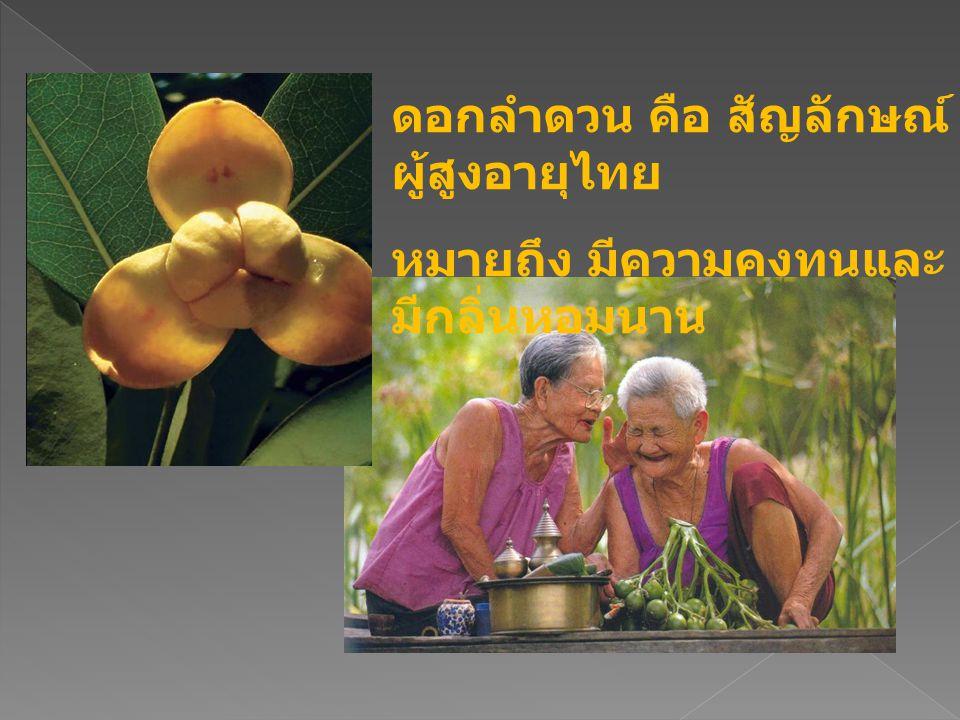 ดอกลำดวน คือ สัญลักษณ์ผู้สูงอายุไทย
