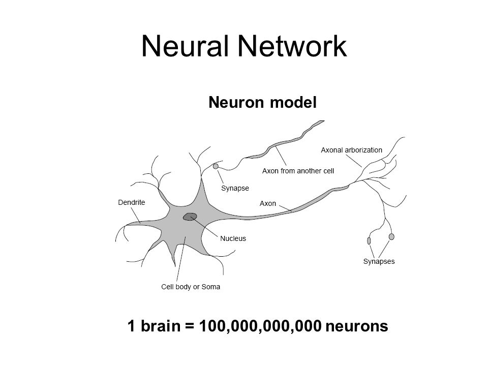 Neural Network Neuron model 1 brain = 100,000,000,000 neurons