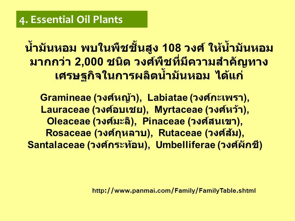 4. Essential Oil Plants น้ำมันหอม พบในพืชชั้นสูง 108 วงศ์ ให้น้ำมันหอมมากกว่า 2,000 ชนิด วงศ์พืชที่มีความสำคัญทางเศรษฐกิจในการผลิตน้ำมันหอม ได้แก่