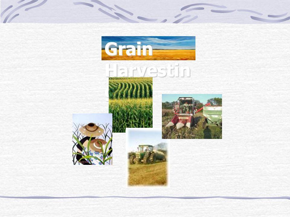 Grain Harvesting