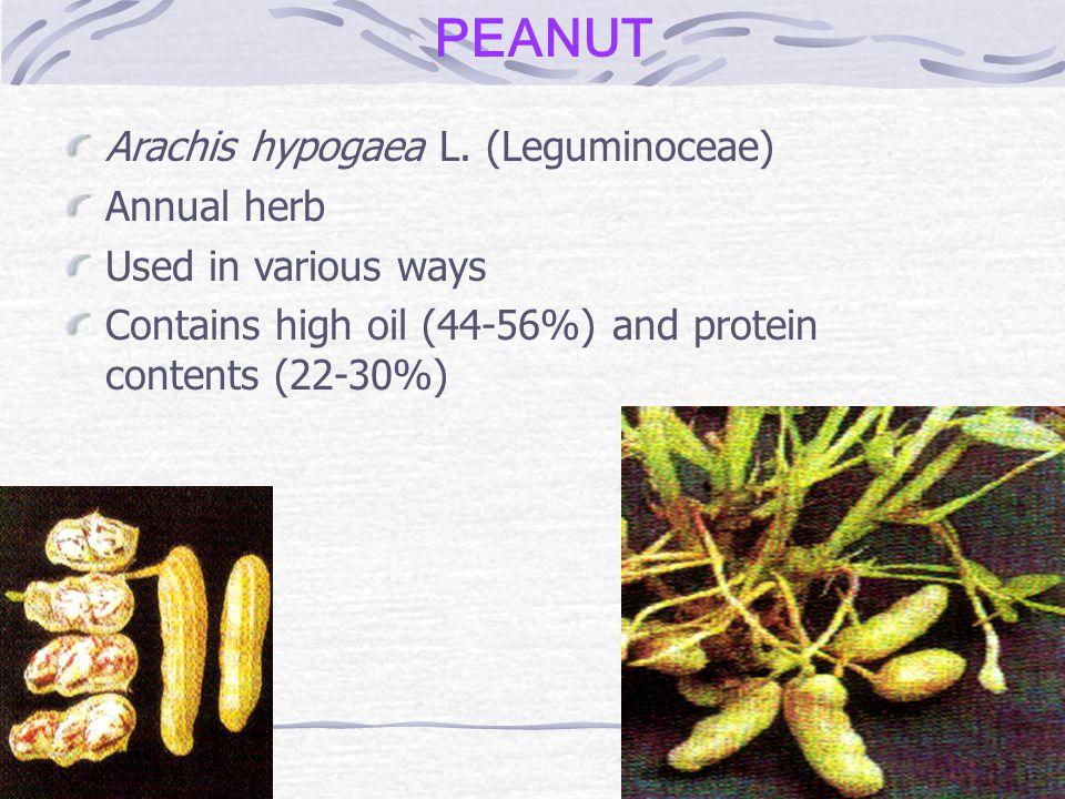 PEANUT Arachis hypogaea L. (Leguminoceae) Annual herb