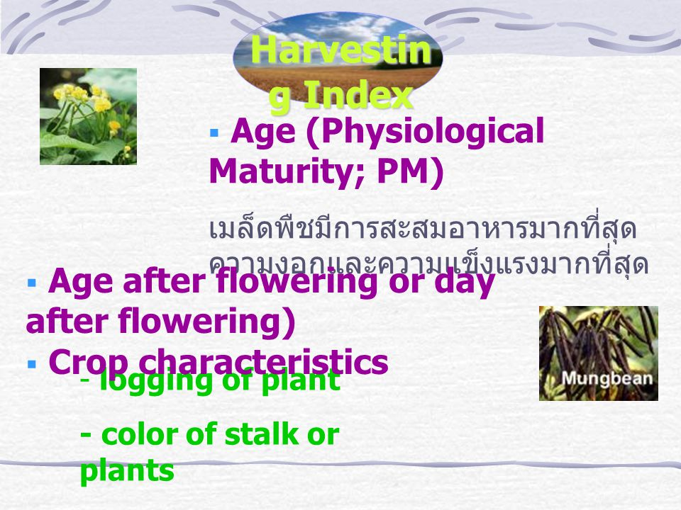 Harvesting Index Age (Physiological Maturity; PM)