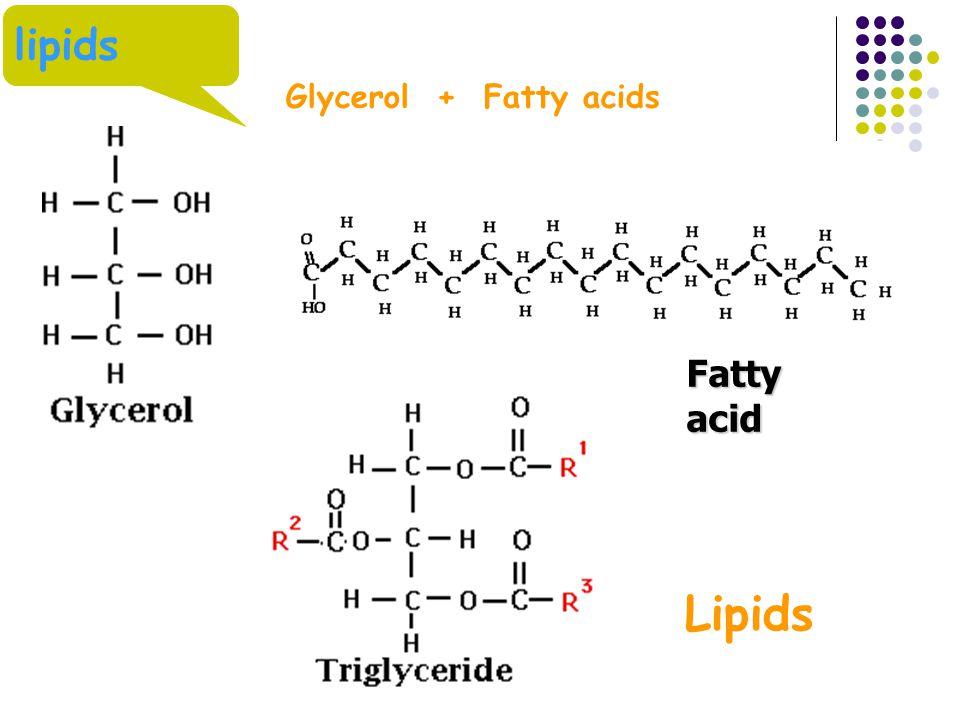 lipids Glycerol + Fatty acids Fatty acid Lipids