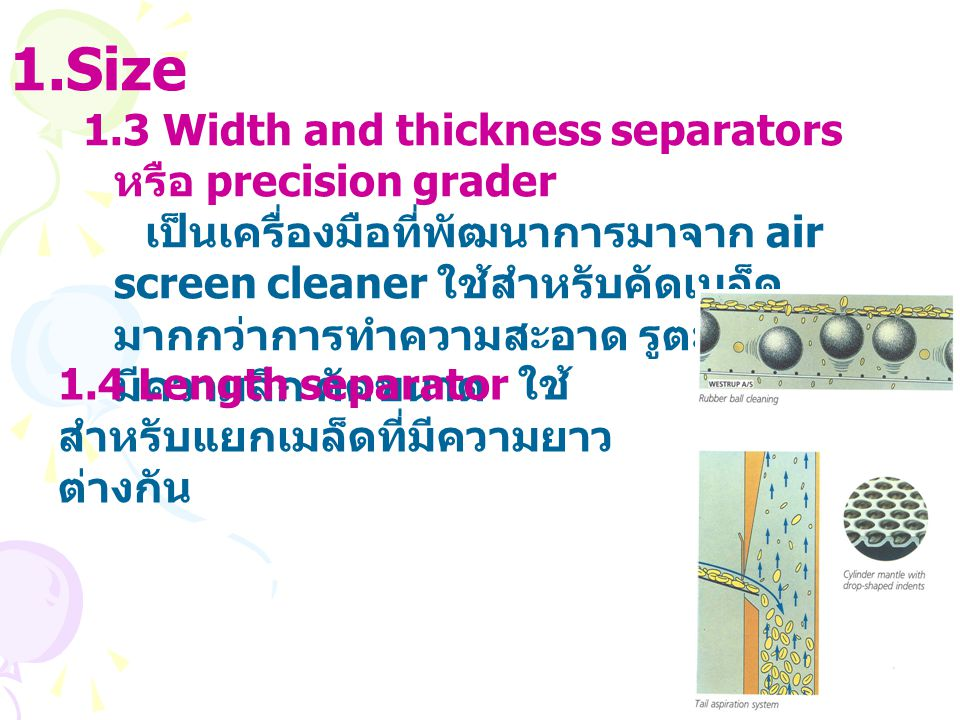 Size 1.3 Width and thickness separators หรือ precision grader