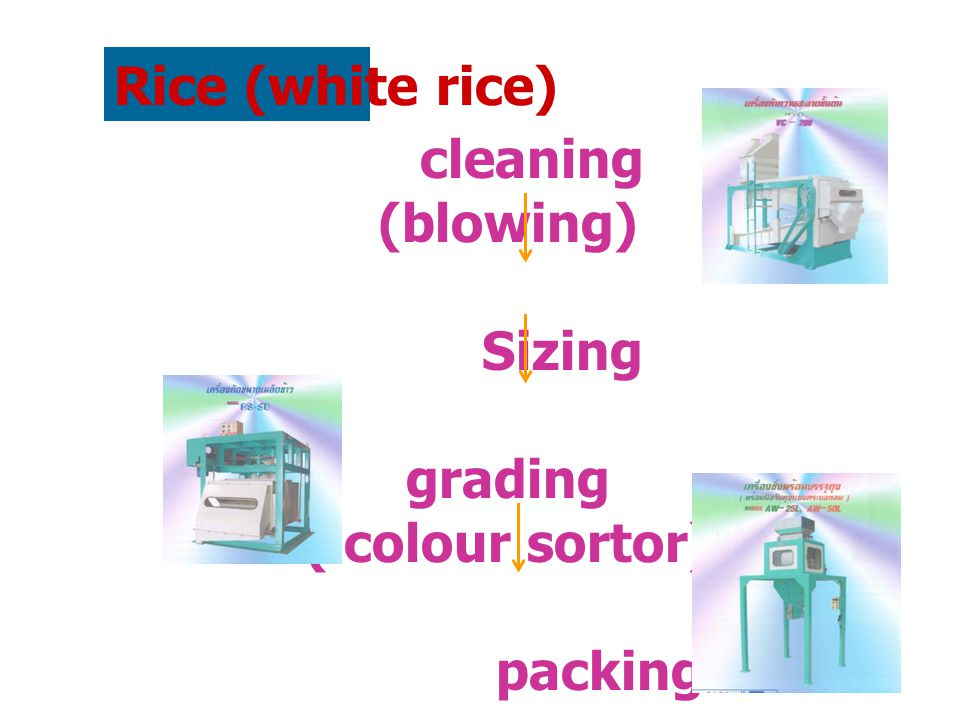 Rice (white rice) cleaning (blowing) Sizing grading ( colour sortor) packing