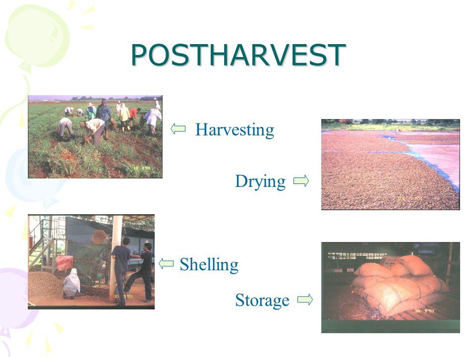 POSTHARVEST Harvesting Drying Shelling Storage