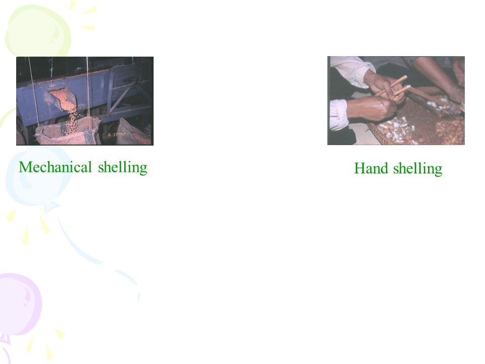 Mechanical shelling Hand shelling