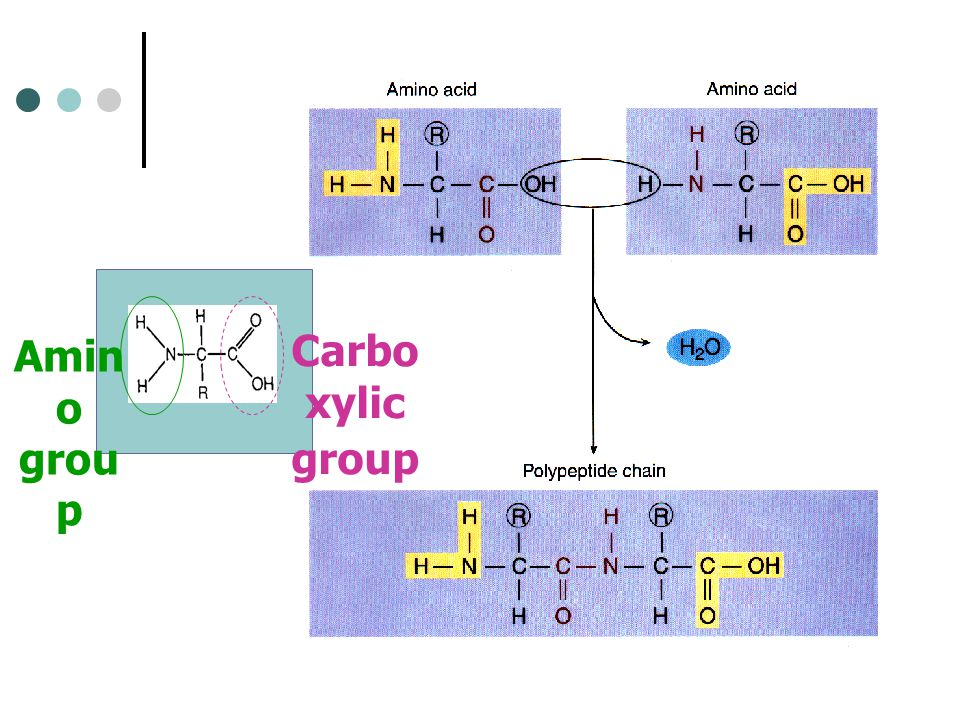Amino group Carboxylic group
