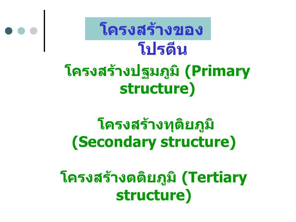 โครงสร้างของโปรตีน โครงสร้างปฐมภูมิ (Primary structure)