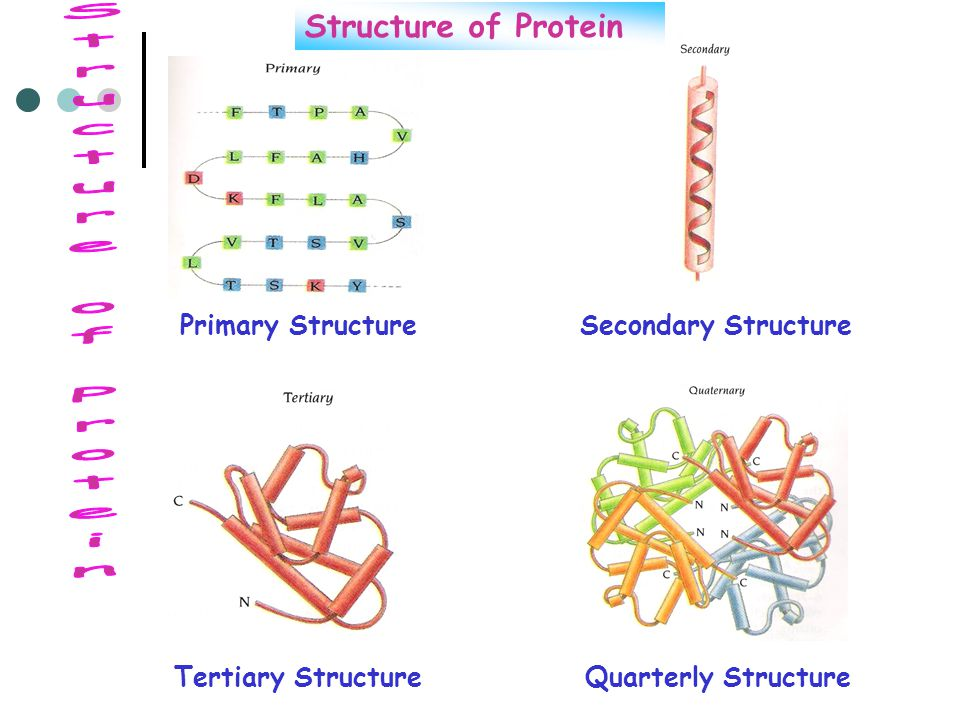 Structure of Protein Structure of Protein Primary Structure