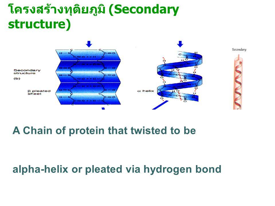 โครงสร้างทุติยภูมิ (Secondary structure)
