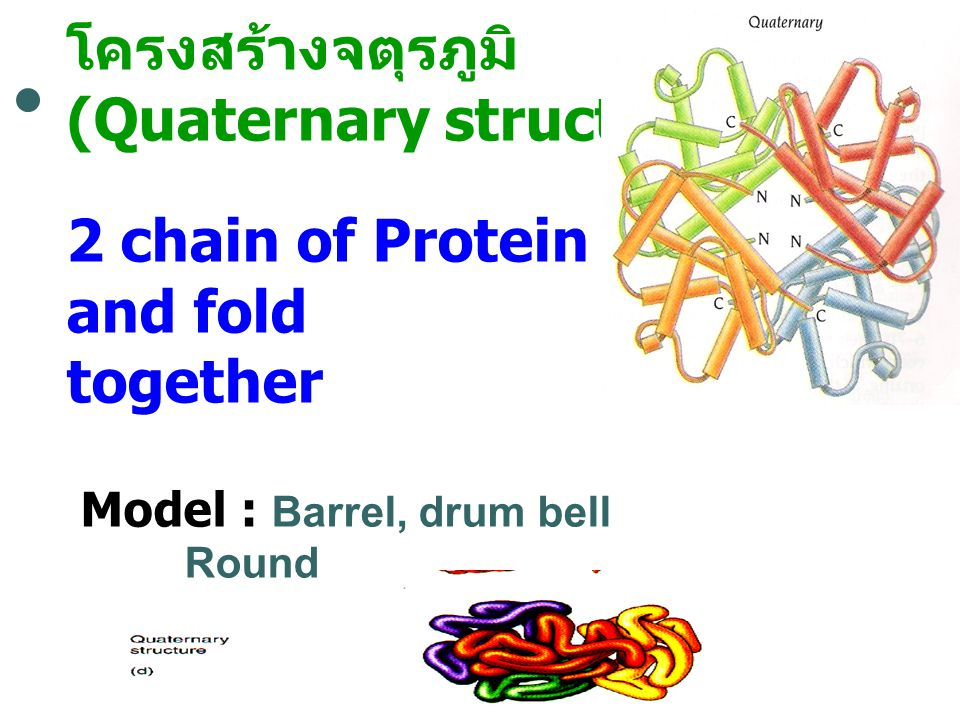 (Quaternary structure) 2 chain of Protein bind and fold together