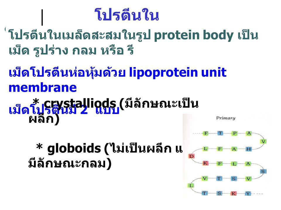 โปรตีนในเมล็ดพืช โปรตีนในเมล็ดสะสมในรูป protein body เป็นเม็ด รูปร่าง กลม หรือ รี เม็ดโปรตีนห่อหุ้มด้วย lipoprotein unit membrane.