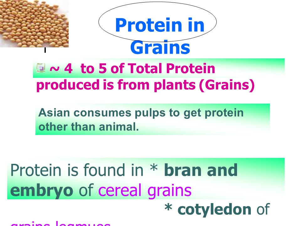 Protein in Grains ~ 4 to 5 of Total Protein produced is from plants (Grains) Asian consumes pulps to get protein other than animal.