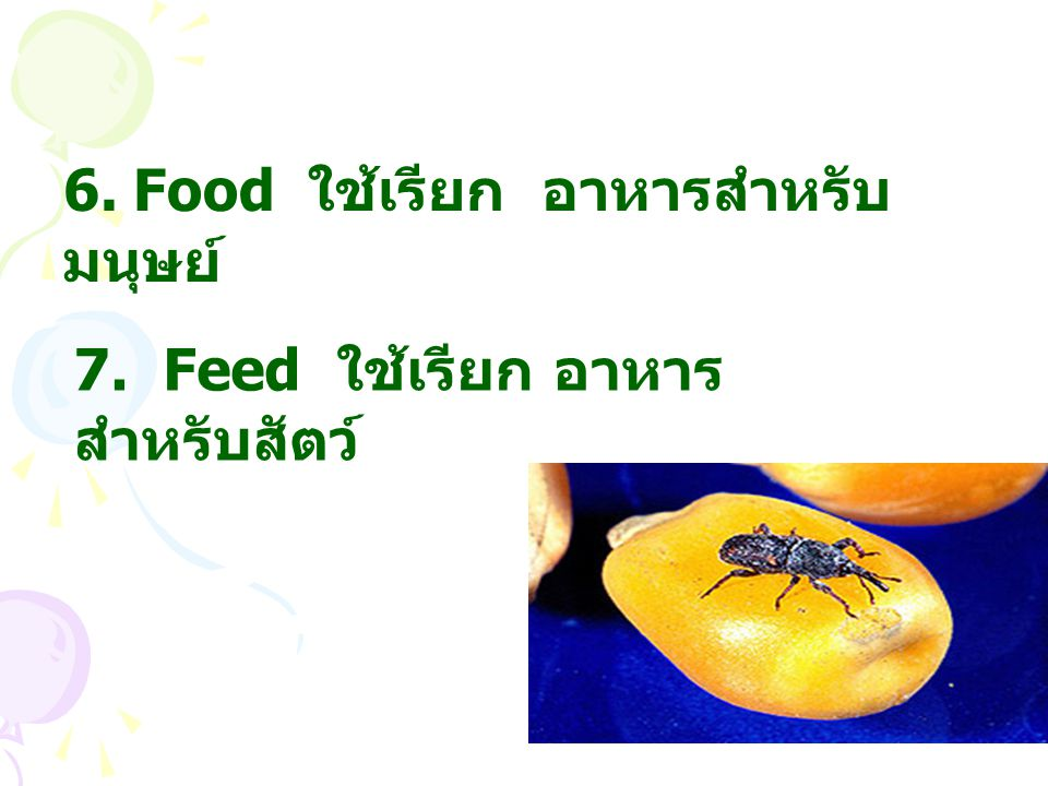 6. Food ใช้เรียก อาหารสำหรับมนุษย์
