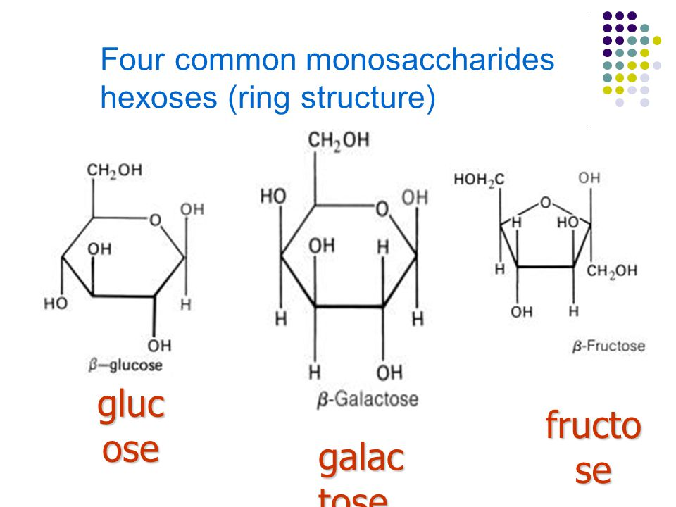 Four common monosaccharides hexoses (ring structure)