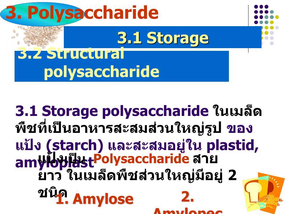 3.1 Storage polysaccharide