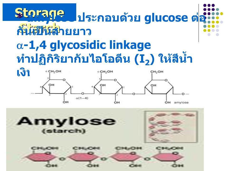Storage Starch * amylose ประกอบด้วย glucose ต่อกันเป็นสายยาว