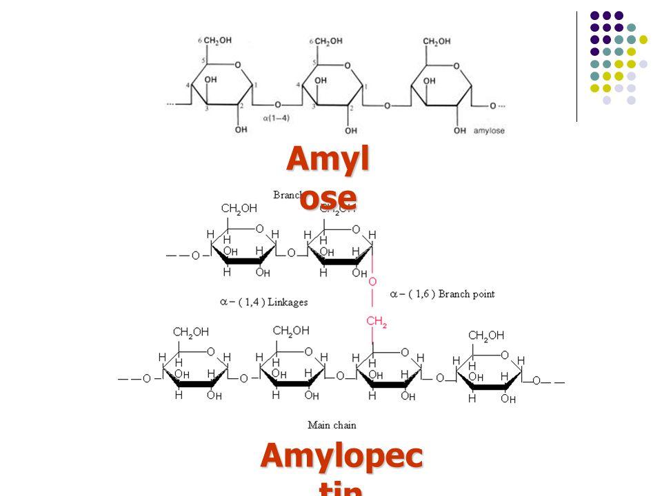 Amylose Amylopectin