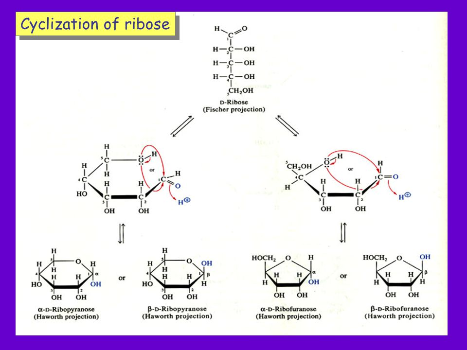 Cyclization of ribose