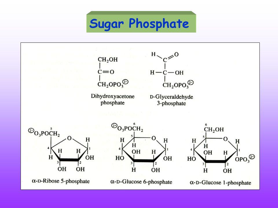 Sugar Phosphate