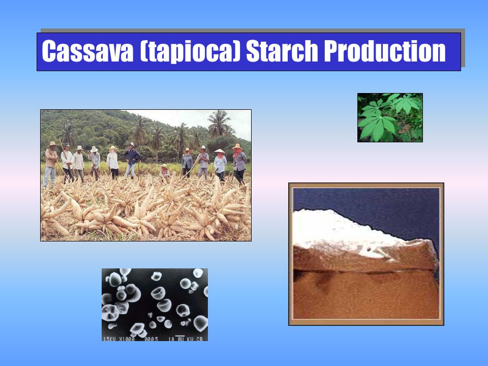 Cassava (tapioca) Starch Production
