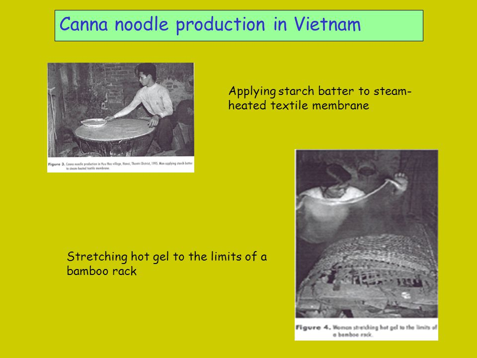 Canna noodle production in Vietnam