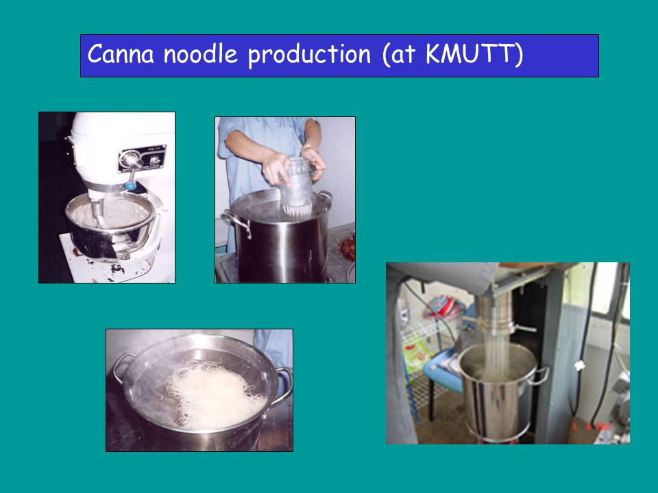 Canna noodle production (at KMUTT)