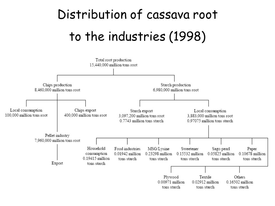 Distribution of cassava root