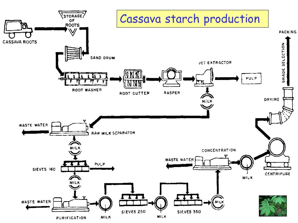 Cassava starch production