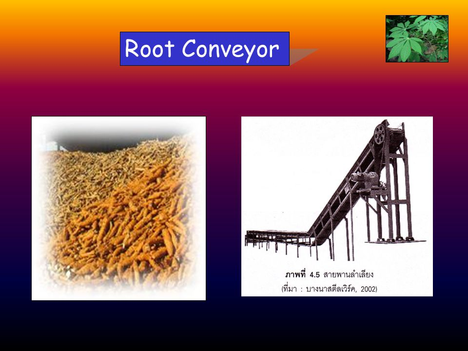 Root Conveyor