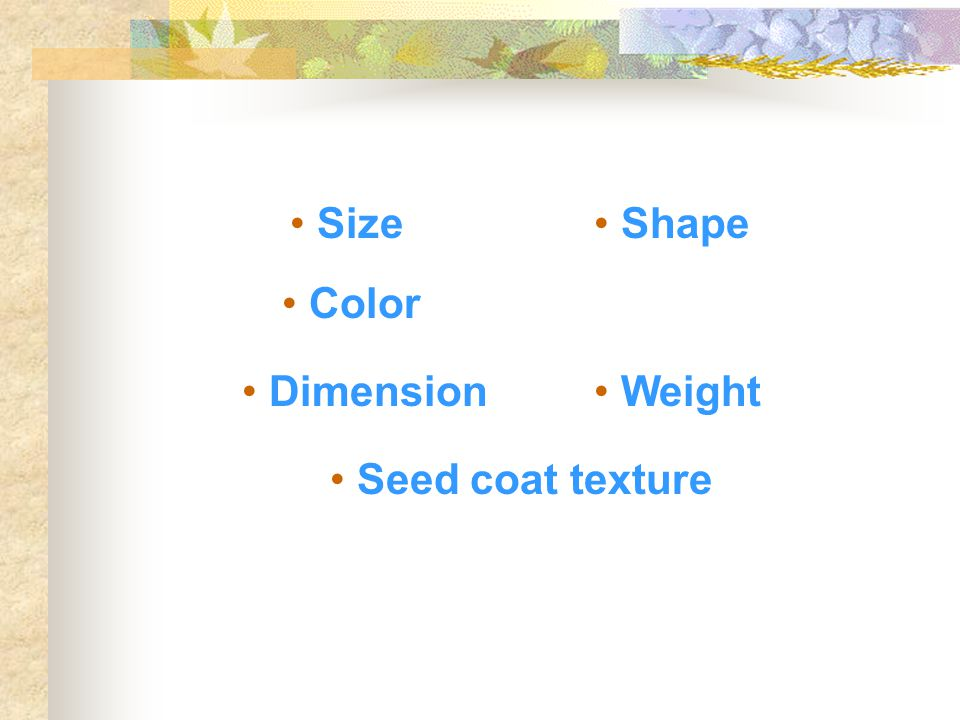 Size Shape Color Dimension Weight Seed coat texture