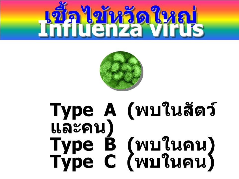 เชื้อไข้หวัดใหญ่ Influenza virus