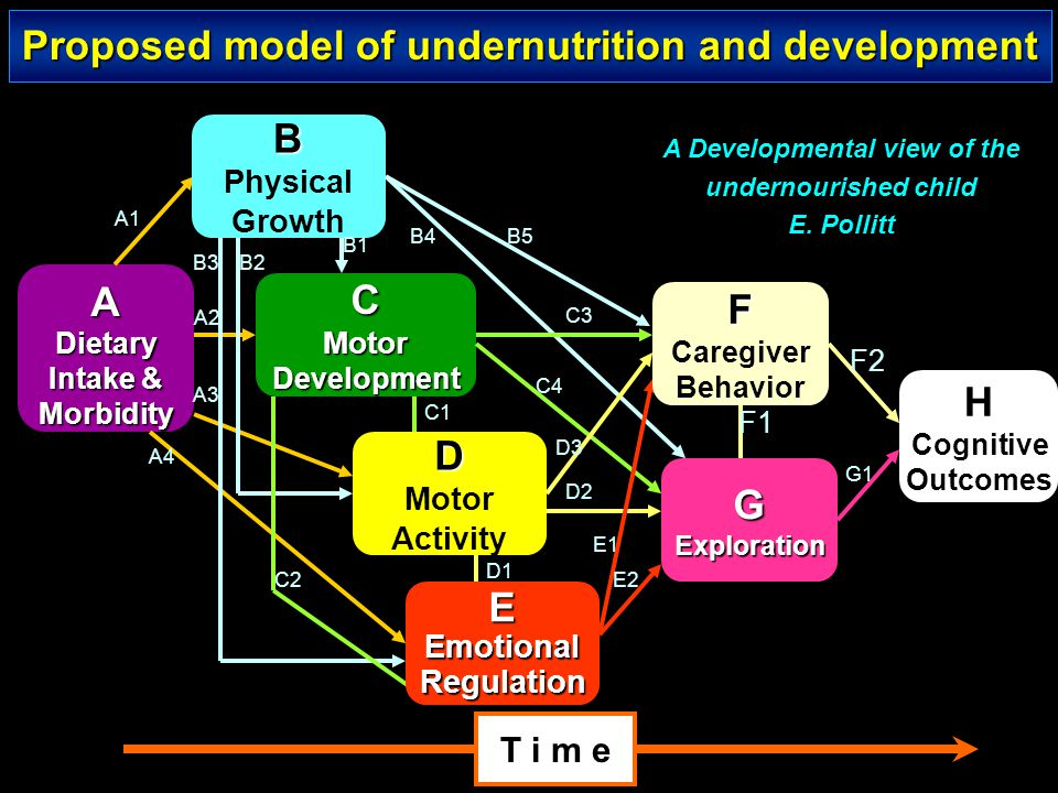 Proposed model of undernutrition and development B A C F D H E G
