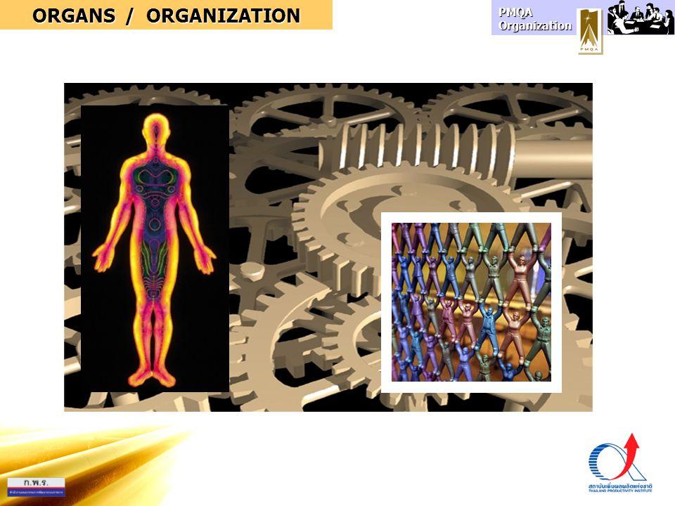 ORGANS / ORGANIZATION