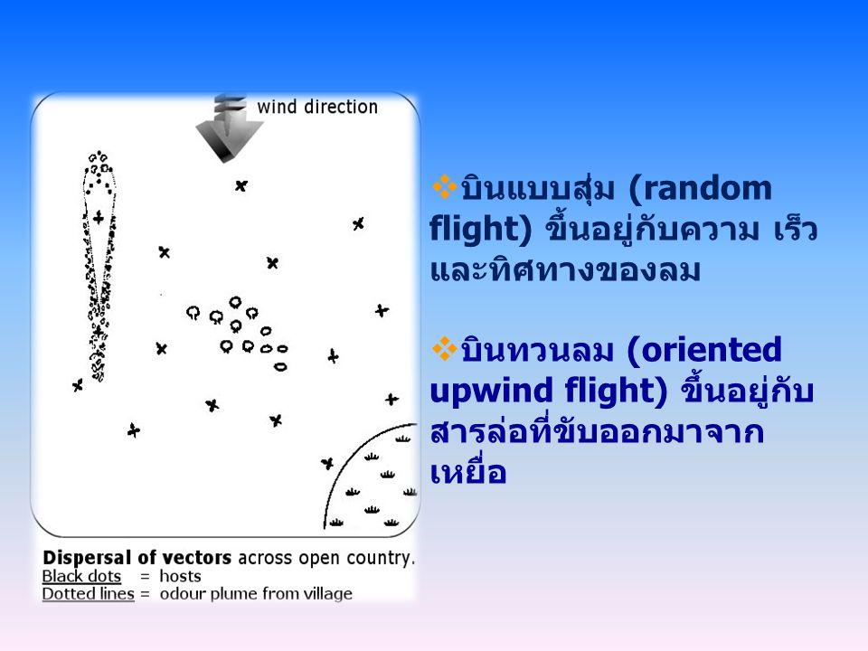 บินแบบสุ่ม (random flight) ขึ้นอยู่กับความ เร็ว และทิศทางของลม