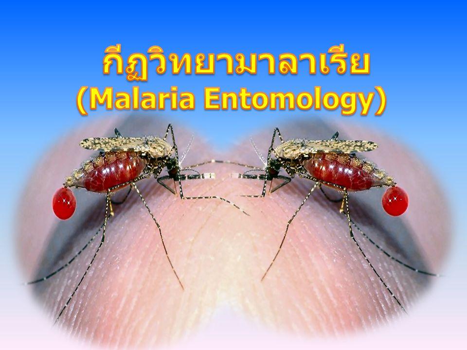 กีฏวิทยามาลาเรีย (Malaria Entomology)