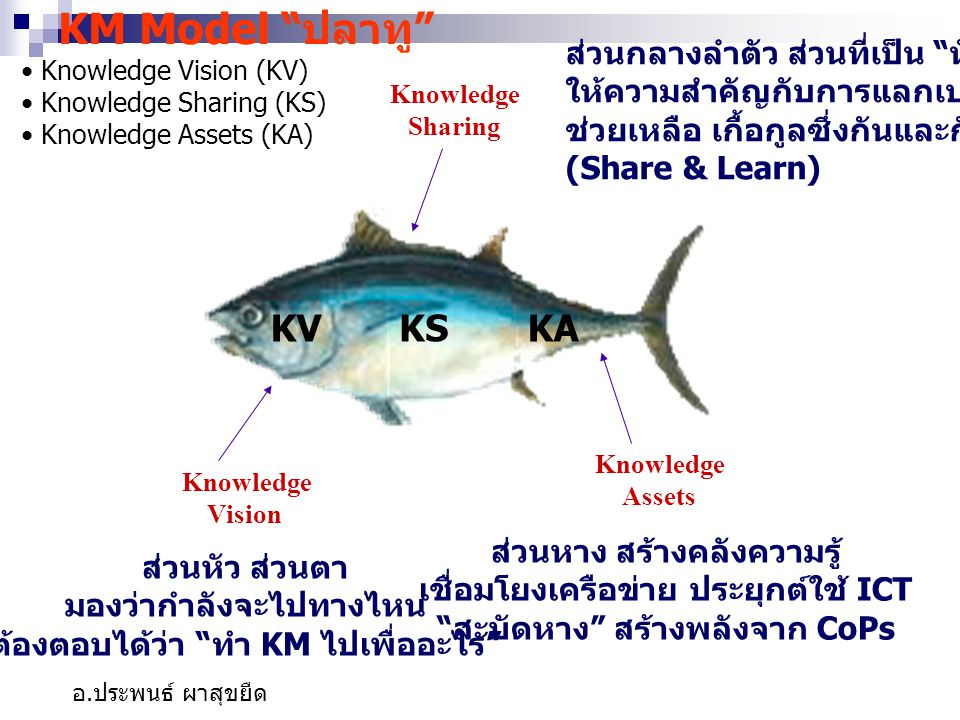 KM Model ปลาทู KV KS KA ส่วนกลางลำตัว ส่วนที่เป็น หัวใจ