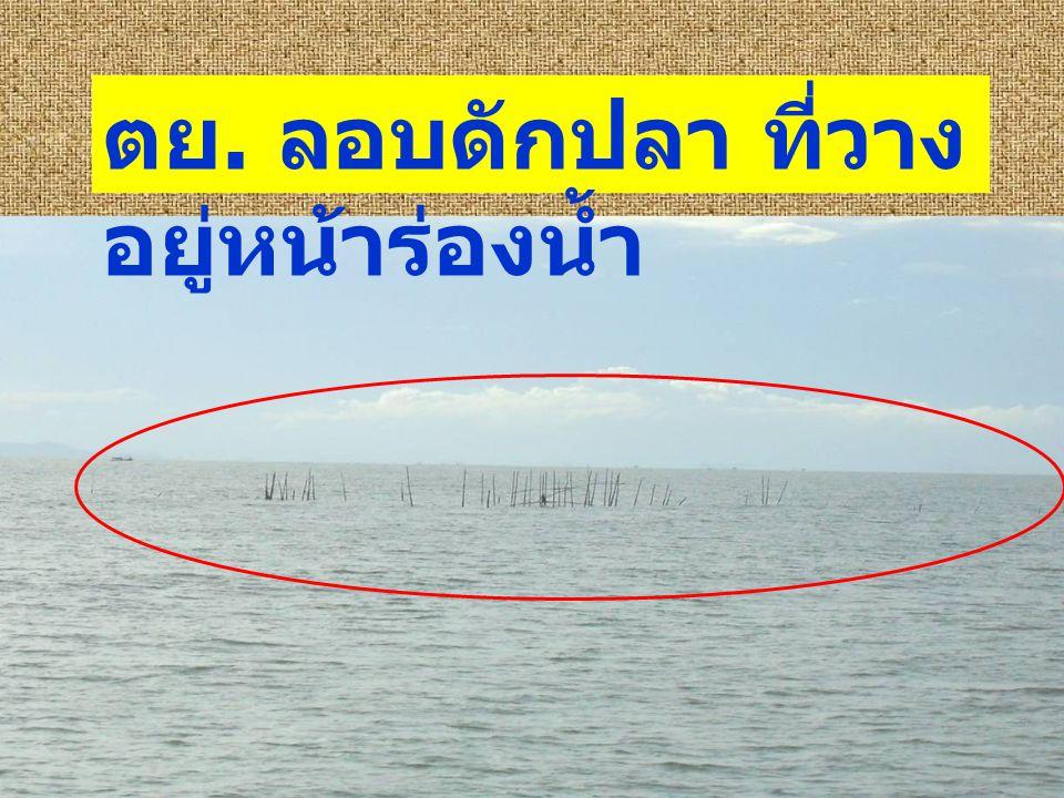 ตย. ลอบดักปลา ที่วางอยู่หน้าร่องน้ำ