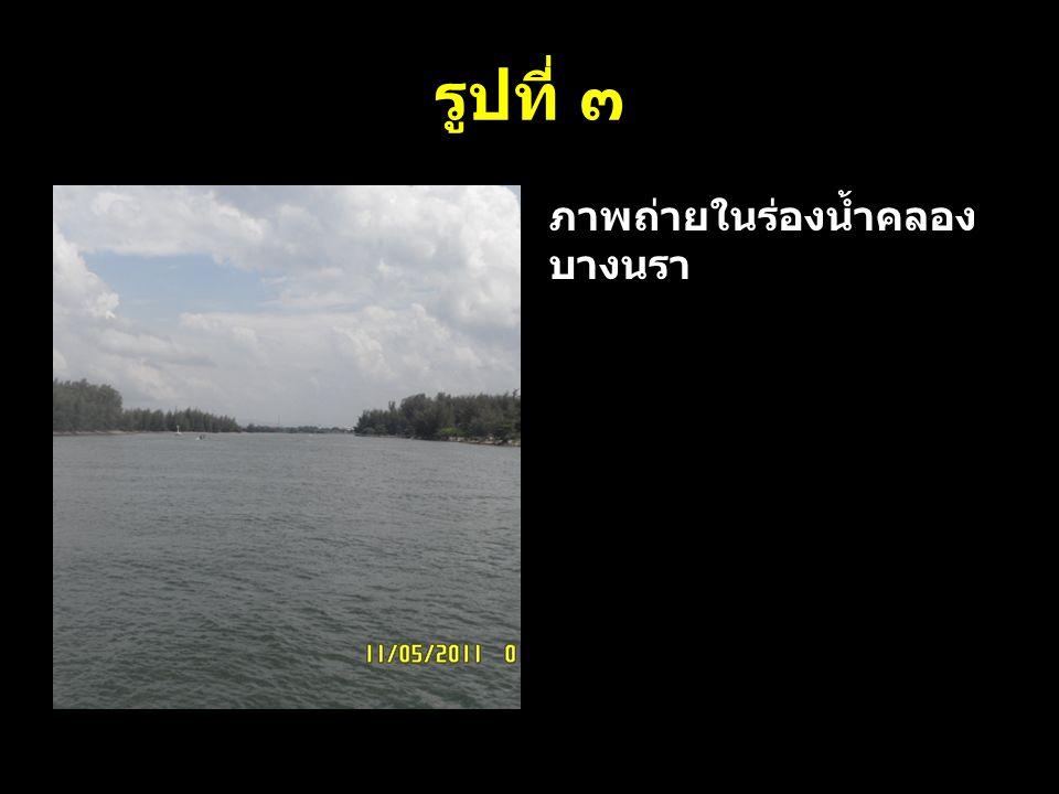 รูปที่ ๓ ภาพถ่ายในร่องน้ำคลองบางนรา
