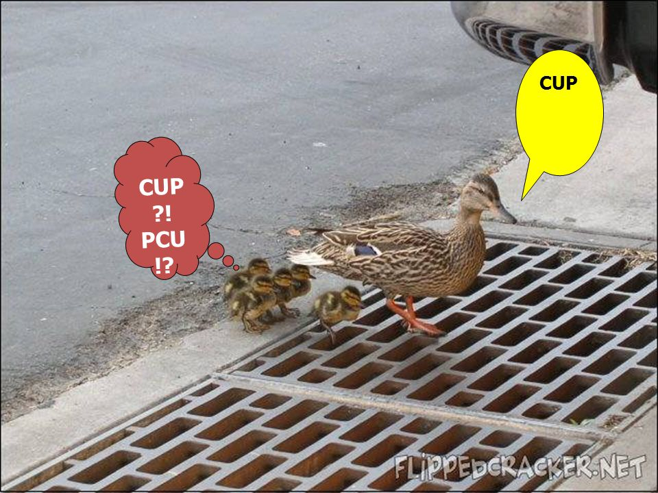 CUP CUP ! PCU !