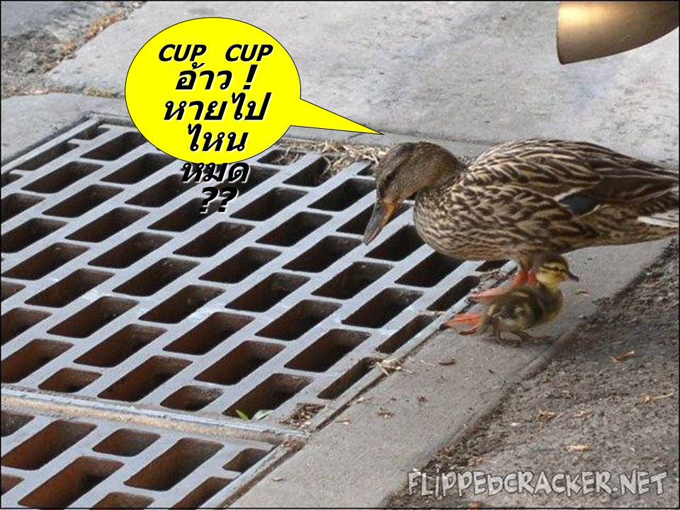 CUP CUPอ้าว ! หายไปไหนหมด